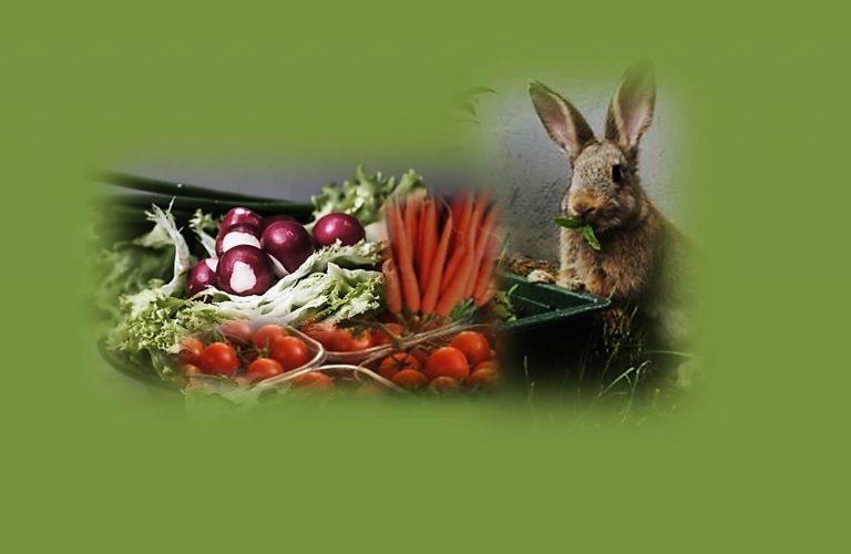 טיפ עגבניה וגזר לשיזוף טבעי. תמונה של ארנב עם ירקות עגבניות וגזר.