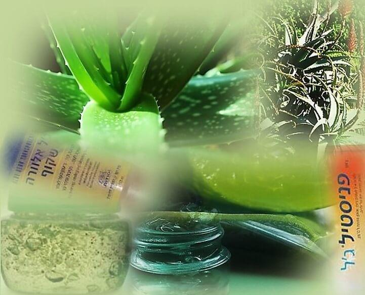 טיפ ג'ל אלוורה או פניסטיל ג'ל לעקיצת מדוזה. תמונה של צמח האלוורה, ג'ל אלוורה ופניסטיל ג'ל.